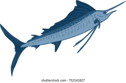 Leaping sailfish illustration
