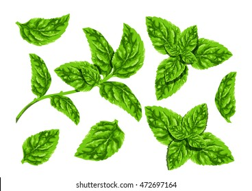 leave mint suitable for decorative element design