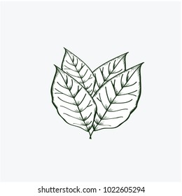 Leave tobacco Vector Template Design