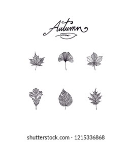 Leaves in autumn black outline vector illustration herbarium set collection. Leaf silhouette shapes, stripe black lines sample pattern decoration. Autumn letters logo typography text set collection.