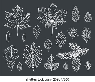 The leaves of different trees are drawn with chalk on black chalkboard. Branches and cones of conifers. Sketch, design elements. Vector illustration