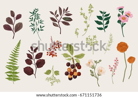 Leaves flowers and berries