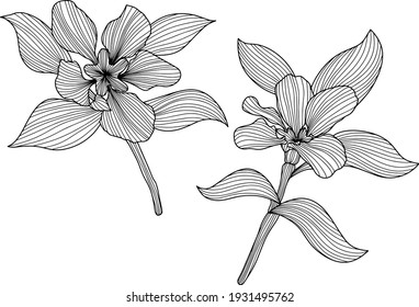 Leaves and flowers isolated on white. Hand drawn vector illustration. Abstract composition