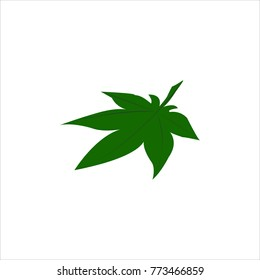 Leaves green vector