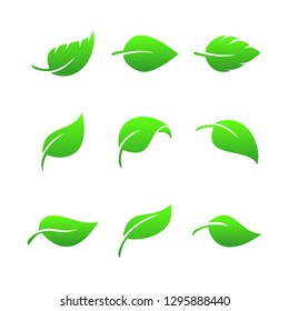 Leaves icon vector set on white background. Various shapes of green leaves of trees and plants. Elements for eco and bio logos. Symbol of nature and health