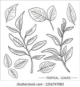 Leaves illustration vector
