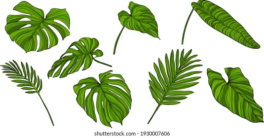 Leaves isolated on white. Green tropical leaves. Hand drawn vector illustration