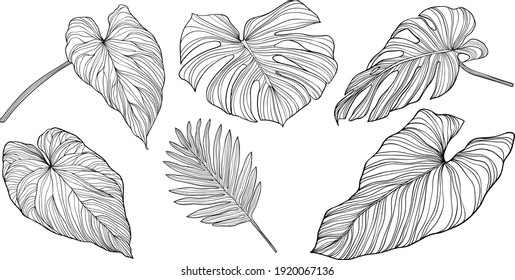 Leaves isolated on white. Tropical leaves. Hand drawn vector illustration.