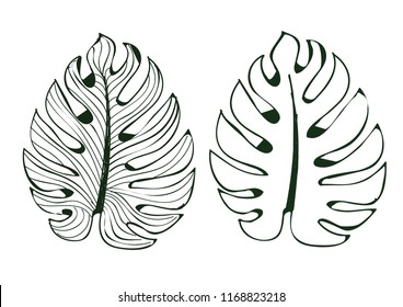 The leaves monstera used in designs on a white background, Isolated lined pattern Illustrator eps 10