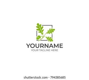 Leaves oak and acorn logo template. Oak tree vector design. Nature illustration