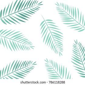 Leaves Palm Tree