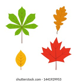 Leaves set in flat style isolated on white background. Autumn leaf, forest branch leaves, maple,  chestnut, oak