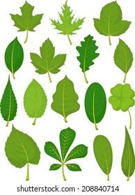 Leaves Set - Green Leaves