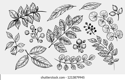 Leaves set. Hand drawn decorative elements. Vector illustration