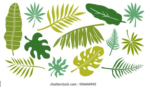 Leaves set. Tropical plants isolated on white background