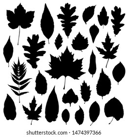 Leaves silhouettes set isolated on white background. Vector illustration