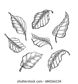 The leaves of the sketch. Set hand drawn vector illustration. Foliage elements of design