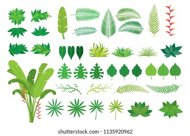 Leaves Tropical Jungle Set, Forrest, Rainforest, Plant and Nature
