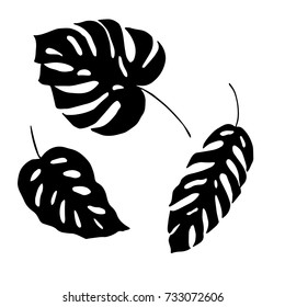 Leaves.Vector illustration.Tropical leaves silhouettes. Tropical background design with exotic palms and plants.