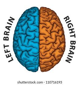 Left Brain, Right Brain. Human brain hemispheres. EPS 8, CMYK
