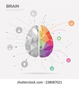 Left brain and right brain Idea concept background .vector illustration