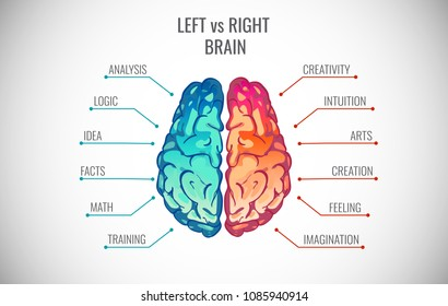 Left and right human brain concept. Creative part and logic part with social and business infographics vector illustration