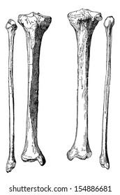 Leg Bones, Tibia and Fibula, vintage engraved illustration. Usual Medicine Dictionary by Dr Labarthe - 1885