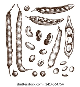 Legume crops drawing set. Bean cultures collection. Gluten free food elements. Vector vegetables - beans, seeds, pods in engraved style. Great for packaging, menu, label. High detailed illustrations.