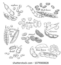 Legumes hand drawn illustration. Nuts, peas, beans, pods and shells sketches isolated on white background.