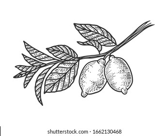 lemon branch with fruits sketch engraving vector illustration. T-shirt apparel print design. Scratch board imitation. Black and white hand drawn image.