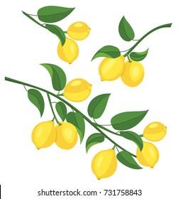 Lemon branch isolated on white background. Vector illustration.