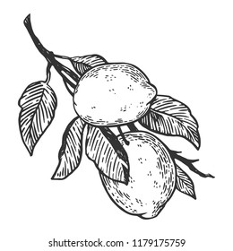 lemon citrus fruit engraving vector illustration. Scratch board style imitation. Black and white hand drawn image.