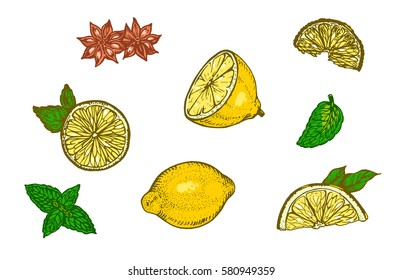 Lemon and a delicious cut lemon slices. Mint leaves on white background. Vector illustration. Ink line draw vector. Drawing engraving illustration