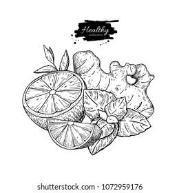 Lemon, ginger and mint vector drawing. Root, hearb leaf and fruit slice sketch. Engraved illustration with tea or lemonade ingredient, alternative medicine, flu treatment. Label,  packaging design.