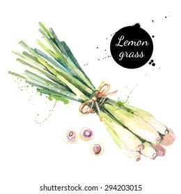 Lemon grass. Hand drawn watercolor painting on white background. Vector illustration