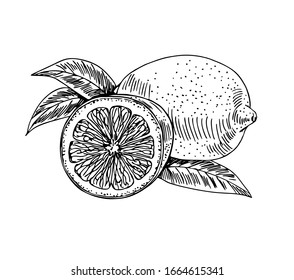 Lemon with half and leaves in line art style.