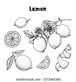 Lemon hand drawn collection, graphic elements. Vector illustration. Lemon sketch for menu design, brochure illustration. Black and white design. Citrus lemon pattern illustration. Can used for package