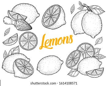 Lemon hand drawn engraving sketch illustration set. Lemon etch collection isolated on white background. Lemon vector fruit vegan cuisine ingredient.