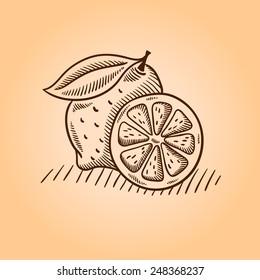 Lemon. Retro engraving style. Vector hand drawing