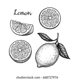 Lemon set. Isolated on white background. Hand drawn vector illustration. Retro style.