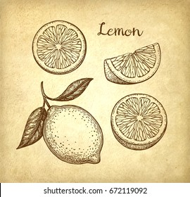 Lemon set. Old paper background. Hand drawn vector illustration. Retro style.