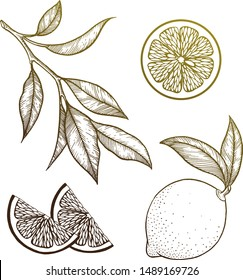 Lemon set. Vector illustration. Graphics.