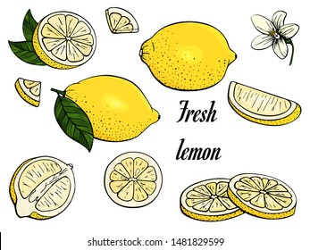 Lemon. Set yellow citrus. Fresh fruits. Whole lemon, slice, cut pieces, flower, plant leaves. Vector. Drawn freehand. Stylized linear illustration. Isolated on white background. Color.
