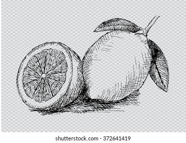 Lemon. Sketchy style.