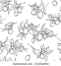 Lemon tree branch with lemons, flowers and leaves. Seamless pattern, background. Outline hand drawing vector illustration in black, white colors.