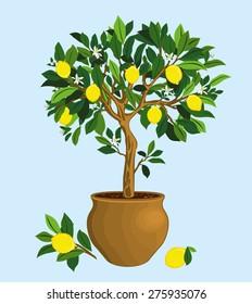 Lemon tree in a ceramic pot