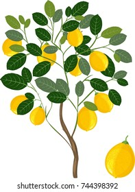 Lemon tree with green leaves and ripe yellow fruits on white background