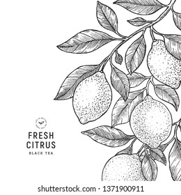 Lemon vintage design template. Engraved  botanical style illustration. Vector illustration