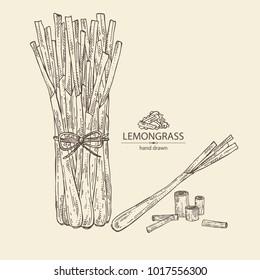 Lemongrass: bunch, plant and dry lemongrass. Vector hand drawn illustration.