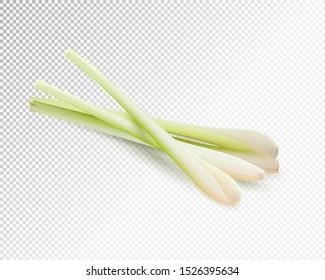 Lemongrass herb vegetable set. Realistic vector on transparent background, 3d illustration